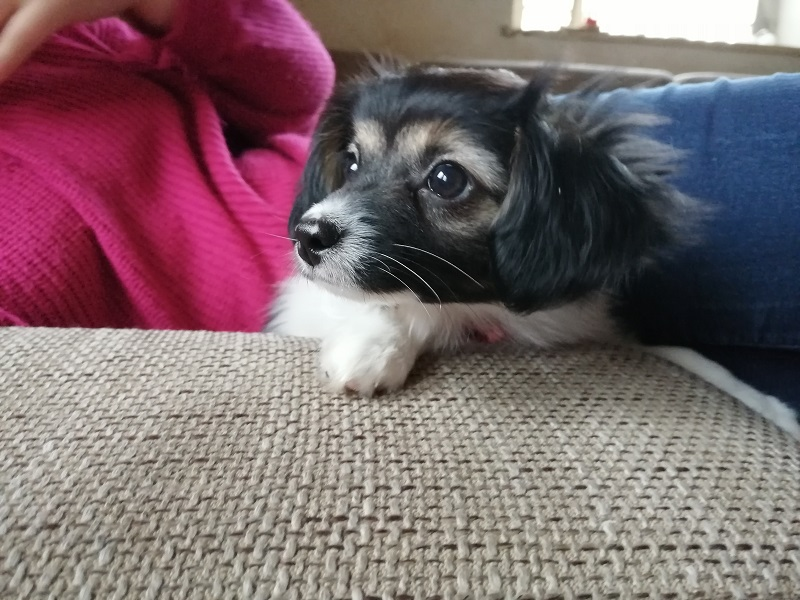 Welches Geräusch war das? Bella Mia total interessiert.