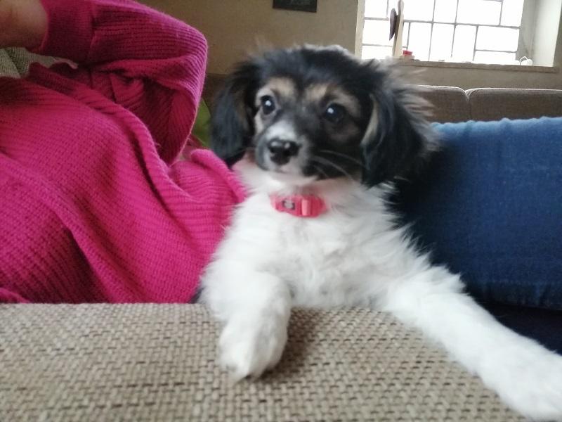 Bela Mia - mit zweieinhalb Monaten - eine kleine, freche Phalene.