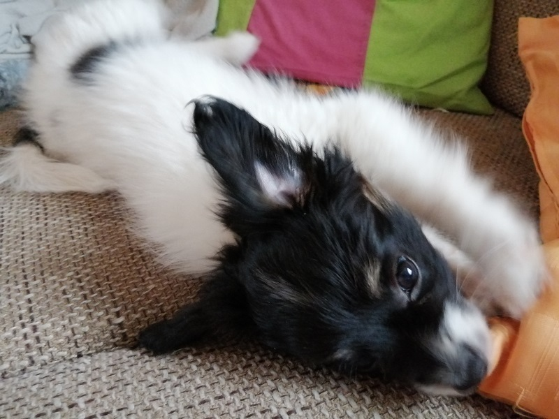 Beluna genießt das Spielen auf der Couch.