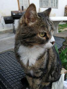 Nikita, unser Großer :)