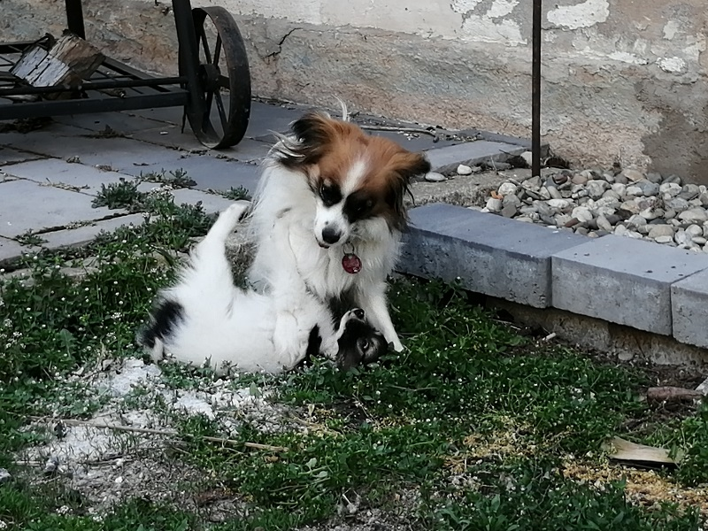 Abby spielt mit Bella Mia im Hof.